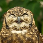 Sleep Patterns — Are You a Lark, Owl, or Hummingbird?