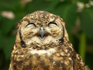 LarksOwlsAndHummingbirds